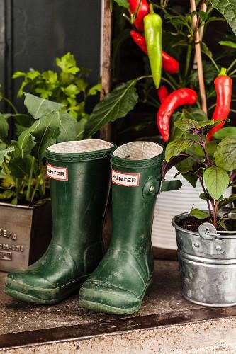 Wellington boots amongst potted vegetable plants on balcony