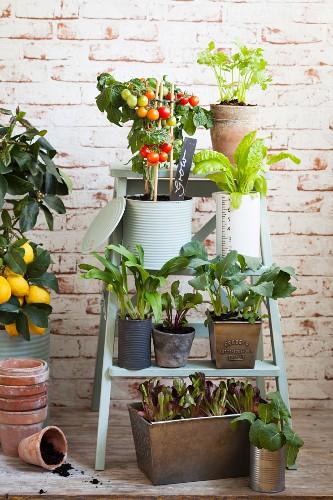 Potted vegetable plants on setpladder