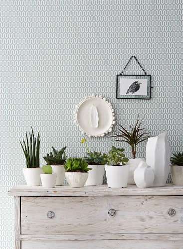 Green plants in white ceramic containers on a whitewashed chest of drawers against green and white patterned wallpaper