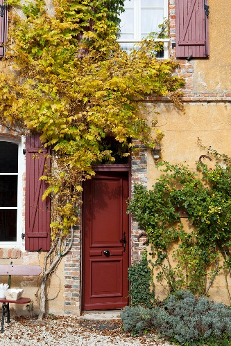 Climbing plants on rustic façade of country house with front door and window shutters painted rusty red