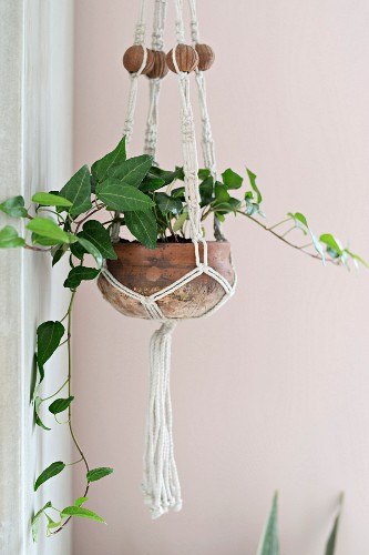 Macrame plant hanger against pink wall