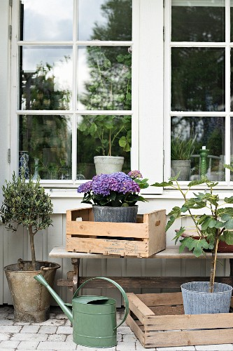 Plant in wooden crated in front of lattice window on terrace
