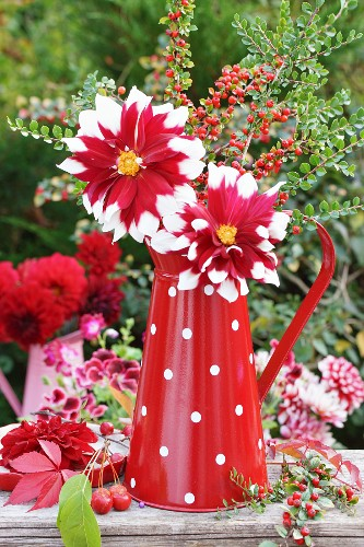 Red and white dahlias and branches of berries in colour-coordinated enamel jug