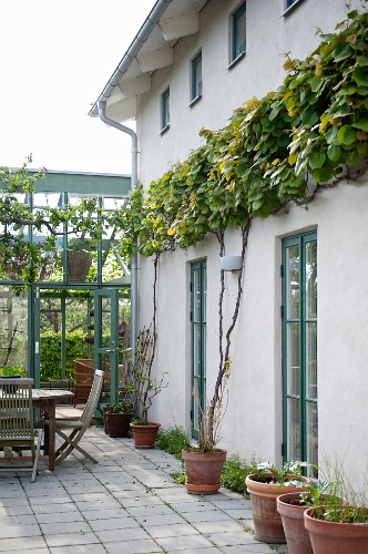Seating area on terrace outside house with climbers on façade and conservatory