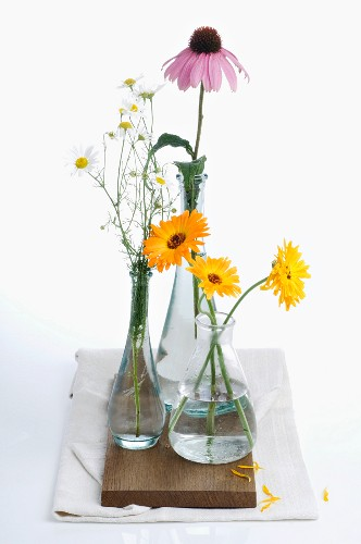 Healing plants in three vases