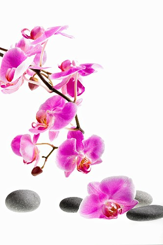 Orchid sprig and pebbles