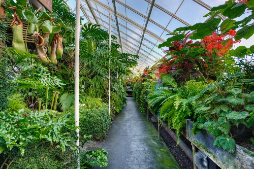 Tropical plants in an open greenhouse in Seattle