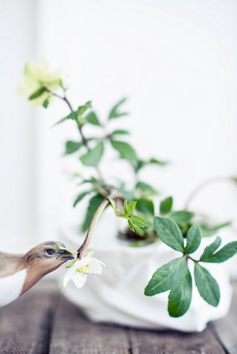 Quail figurine next to hellebore against white background