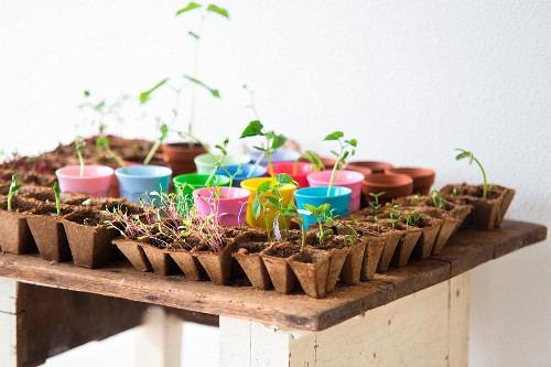 Seedlings in recycled seed trays and pastel pots arranged on rustic wooden table