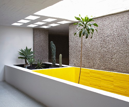 Bed of plants in light well in concrete house
