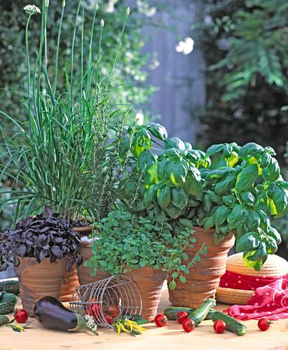 Basil, Origanum, Rosemary, Garlic