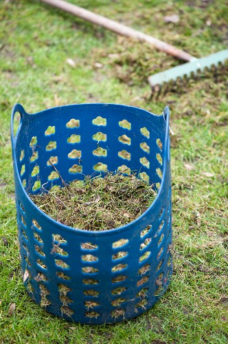Blue plastic basket full of lawn thatch on green lawn