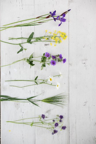 Cut cottage-garden flowers on white wooden boards