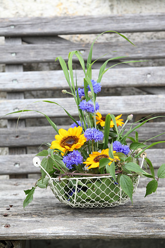 Sunflowers, cornflowers, blades of grass and clematis tendrils in wire basket
