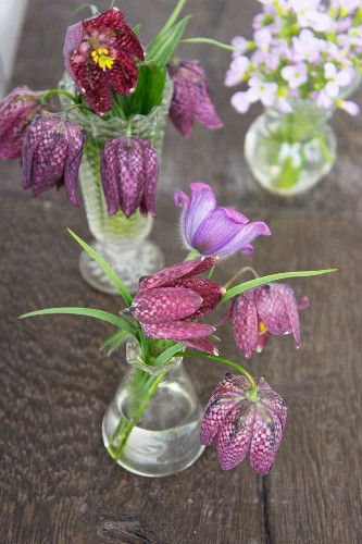 Snakes' head fritillaries, pasque flowers and lady's smock in small vases