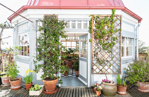 Conservatory and spring flowers on roof terrace