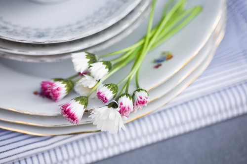 Daisies on stacked plates