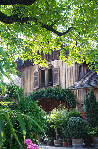 View of wooden house and potted plants through tree branches