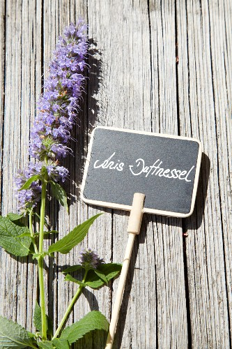 Licorice mint and plant label on weathered wood