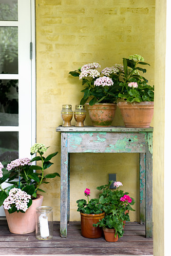 Hydrangeas and geraniums on and next to old wooden table