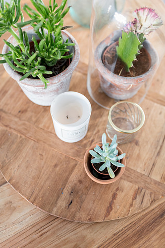 Succulents and cacti on wooden board seen from above