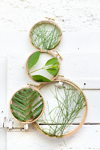 Fresh leaves and plants framed in embroidery frames