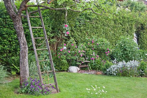 Old wooden ladder leaning against tree in idyllic summer garden