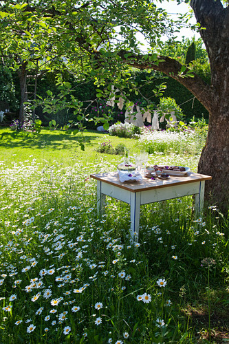 Set table under tree in flowering meadow in summery garden