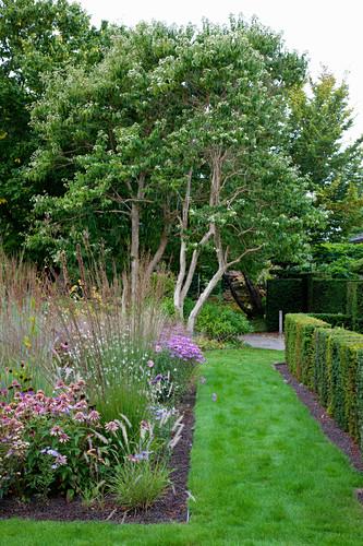 Herbaceous border edging lawn path