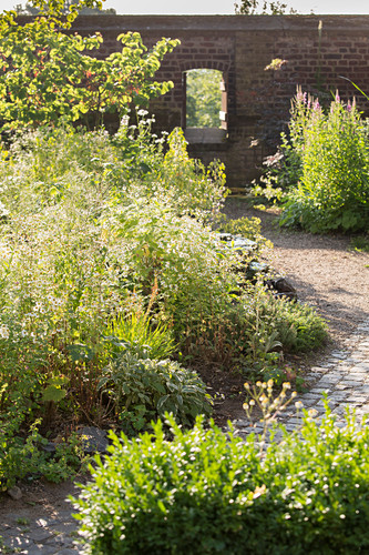 Herbs in monastery garden (Kamp abbey, Kamp-Lintfort, Germany)
