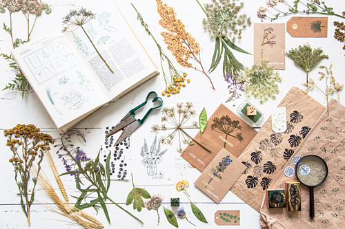 Dried and pressed plants, botanical book and printed patternes