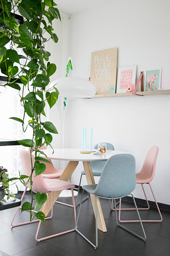 Trailing devil's ivy in front of round dining table with pastel chairs