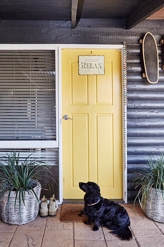 Dog in front of a yellow painted entrance door