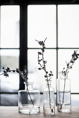 Zweige in alten Glasflaschen vor einem Sprossenfenster