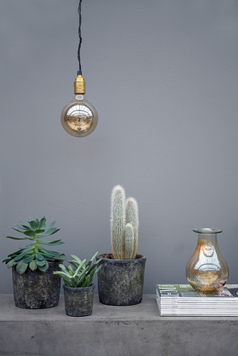 Cacti and succulents in stone pots against grey wall