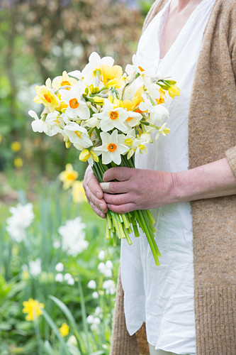 Woman holding bunch of narcissus