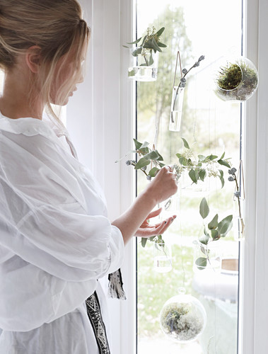 Young woman arranging twigs in glass vases mounted on window
