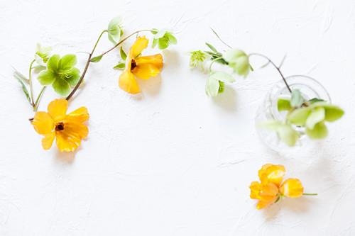 Japanische Ranunkel und weiße Christrosen