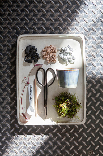 Equipment for planting a bonsai tree