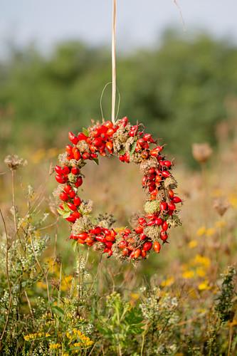 Wreath of rose hips in garden