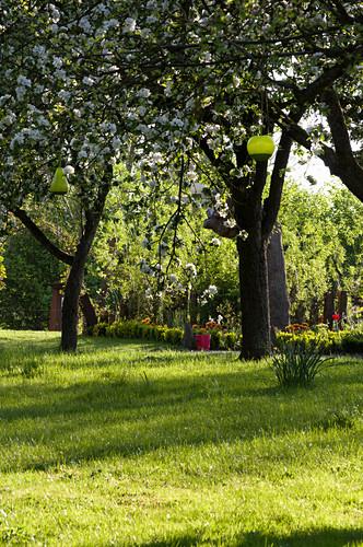 Flowering fruit trees in garden