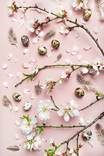 Branches of almond blossom, quail eggs and feathers on light pink background (top view)