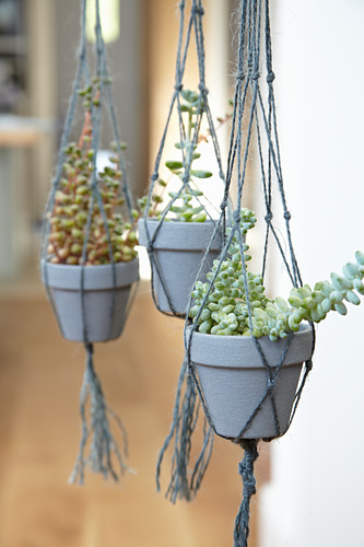 Succulents in macrame hangers