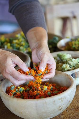 Dried marigolds falling through woman's hands into bowl