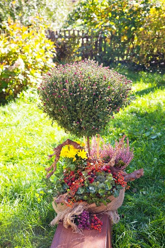 Standard chrysanthemum decorated with ivy, heather, rose hips and yellow chrysanthemums