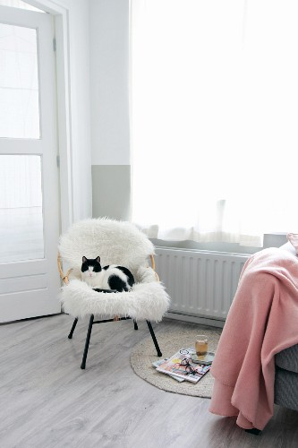 Cat on white sheepskin on rattan chair next to pink woollen blanket and magazines