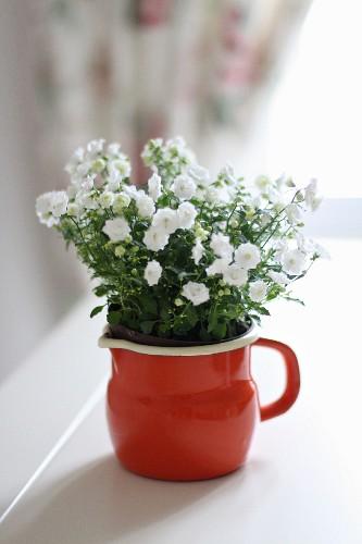 White campanula in red enamel jug