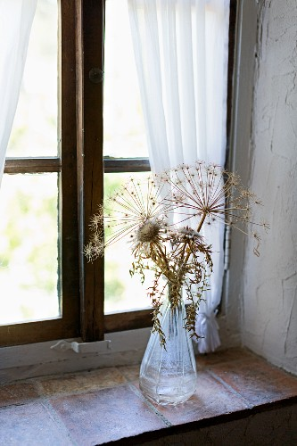 Dried thistles and flower umbels on a windowsill