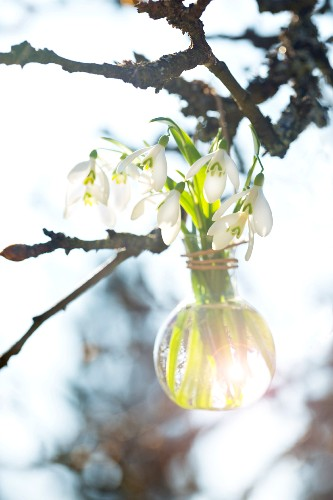 Snowdrops in a glass vase hanging from a twig