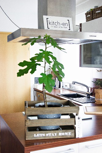 Small green tree in rustic wooden crate with motto on kitchen counter